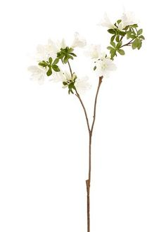Create a stunning faux flower bouquet with this white rhododendron spray. Easily add texture and height to any flower arrangement or design with just a spray or two. White Tall x Wide Wide Blooms 2 Branches Silk Shop All Hard to Find Fake Flowers Fake Flowers Decor, Faux Flower Arrangements, Wedding Flower Decorations, Faux Flowers, Flower Bouquet Wedding, Silk Flowers, Gerbera Wedding, Bridal Bouquets, Wedding Centerpieces