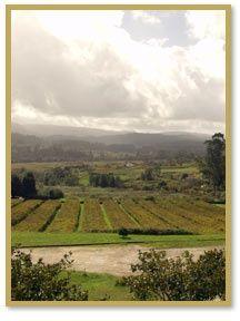 The Segura Viudas winery in Penedès, Spain. The PENEDES wine is very ...