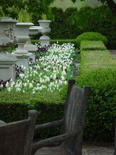 La Piscine - poolside decorating chic - urns on pedestals make a formal garden - Formal Gardens, Outdoor Gardens, Modern Gardens, Japanese Gardens, Formal Garden Design, Planting Tulips, Garden Urns, Boxwood Garden, Garden Hedges