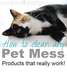 How to clean any pet mess! Tips and Tricks