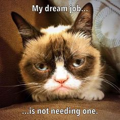 Career Counseling with Grumpy Cat.