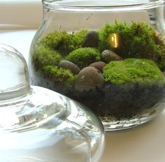 Gorgeous little moss terrarium. Perfect as a little addition on a desk to make working hard a bit more cheerful!