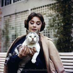 Rare Audrey Hepburn — timelessaudrey: Audrey photographed by Sam Shaw...