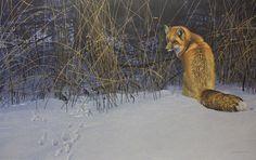 Robert Bateman Red Fox On the Prowl