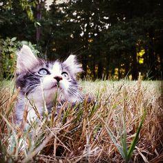 sweet little kitten watching the sky