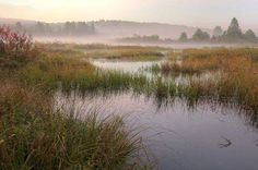 "...""morning marsh view..it's wednesday""...salish sea...at the border... Photography by John Cannell FB  - Wonderful photo!  I love marshes!"