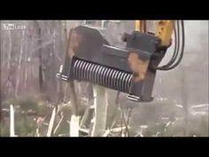 Monster Tree Cutting Machine ! - YouTube