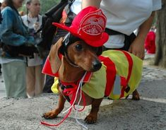 Put out small fires | 24 Things Your Dachshund Can Do For You