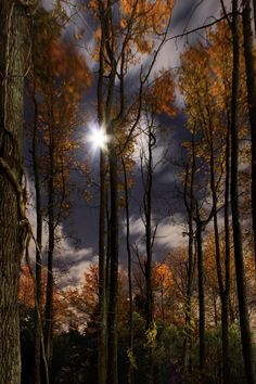 Moonlit Walk in the Woods by Ron  Azevedo on 500px
