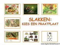 Praatplaten slakken http://digibordonderbouw.nl/index.php/themas/dieren/slakkendigibord