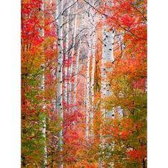 Autumn Passage Canvas Art - Elizabeth Carmel (18 x 24)