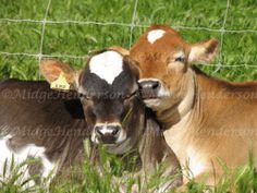 Sleepy calves