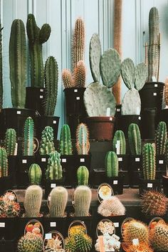 Cacti in every shape and color.