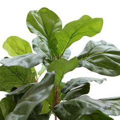 光触媒人工観葉樹、フェイクグリーンのカシワバゴム 4本立 150cm 9240