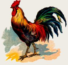 Here is my recent blog on Backyard Chickens Part 2 - Roosters and Eggs