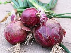 Onion-Red-Burgundy.jpg