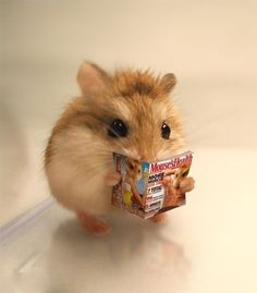 cute animals Pet rats are rodents that are raised by humans for viewing or fun, including many different species. In real life, mainly hamsters. The main food of hamsters is plant seeds, Baby Animals Super Cute, Cute Baby Dogs, Cute Little Animals, Cute Funny Animals, Cute Puppies, Cute Pets, Cutest Animals, Baby Animals Pictures, Cute Animal Pictures