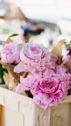 Pink peonies flowers beautiful iphone wallpaper