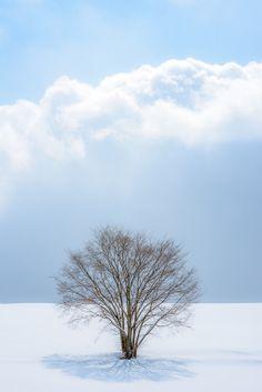 Halo - Biei, Hokkaido, Japan   Jason Arney tree snow clouds sky winter