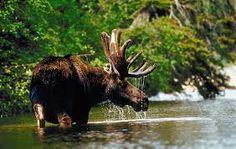 canada scenery - Google Search