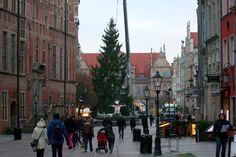 Świąteczna choinka została przywieziona do Gdańska i stanęła na Długim Targu