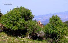 Cortijo Rosetas.Pepita Estevez Sierra Nevada, Country Roads, Mountains, Nature, Travel, Trekking, Waterfalls, Entryway, Naturaleza