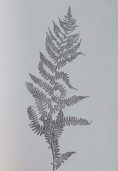 SOLD A beautiful small original fine art botanical monoprint. Modern minimal black print on white paper . Single delicate fern  This unique and
