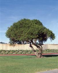 good plants to plant in Phoenix area