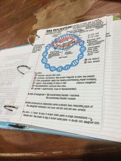 School Motivation, Study Motivation, Pretty Handwriting, Improve Handwriting, College Organization, Pretty Notes, Nursing Notes, Study Hard, Study Inspiration
