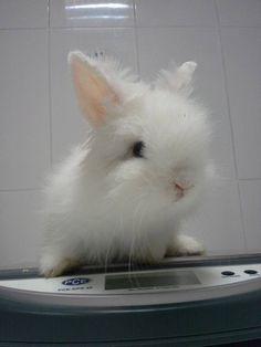 Esta conejita se llama Lusi viene a su primera revisión y para desparasitar e informarse de la alimentación y manejo