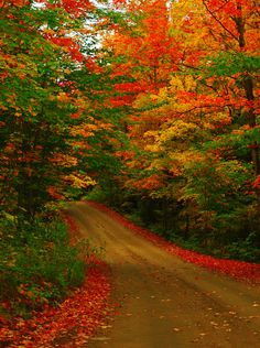 February 14 2020 at Fall In Michigan, Beautiful Places, Beautiful Pictures, New England Fall, Autumn Scenes, Fall Pictures, Aesthetic Pictures, Amazing Nature, Algonquin Park