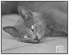 #Occhi di gatto