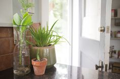 Cute ideas for inside plants...mine all tend to die off pretty quickly