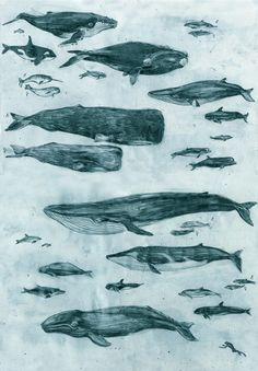 Whales by Penelope Deltour