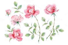 Watercolor pink roses by Natalia Tyulkina on Creative Market