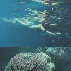 Great Barrier Reef  #australia #summer #summertimes #beach #sunshine #holiday #travel #travelholic #love #sweet #smile #happy #thanks #hkig #ig #bikini #beachgirl #beautiful #beachlife #beachday #bf #gf #bfgftimes #animal #wildlife #roadtrip #herveybay #greatbarrierreef by mariechann http://ift.tt/1UokkV2