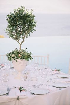 Mini Olive Tree Centerpieces for a Wedding In Messinia - Greece by Stella & Moscha -Photography: Thanos Asfis Tree Centrepiece Wedding, Topiary Wedding, Topiary Centerpieces, Wedding Decorations, Wedding Trees, Wedding Venues, Destination Wedding, Olive Branch Wedding, Olive Wedding