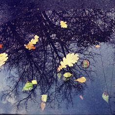 DAY 2 - I saw this! #fmsphotoaday I Saw, November, Challenge, Painting, Art, November Born, Art Background, Painting Art, Kunst