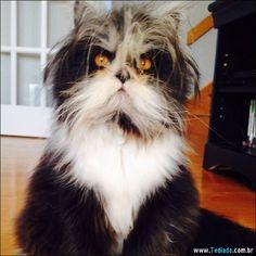 Atchoum o gato com os olhos mais assustadores que você já viu
