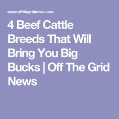 4 Beef Cattle Breeds That Will Bring You Big Bucks | Off The Grid News