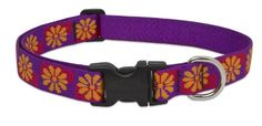 LupinePet 1Inch Flower Box Adjustable Dog Collar for Medium and Large Dogs 12 to 20Inch -- Want additional info? Click on the image.