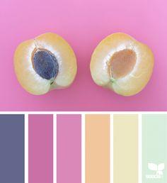 Color Fruit