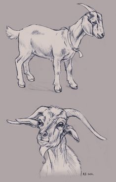 goat_sketches_by_beccapearl-d4nwaud.jpg 1,053×1,646 pixels