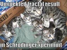 Science Caturday: Schrodinger's Kittens Cat Jokes, Funny Animal Memes, Funny Animals, Cute Animals, Animal Humor, Pet Memes, Silly Cats, Crazy Cats, Funny Cats