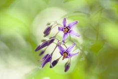 Scherptediepte bij bloemen fotograferen