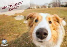 Hundekekse schnell und leicht selber backen. Leckere, gesunde Rezepte für deinen Hund. Das solltest du beachten.