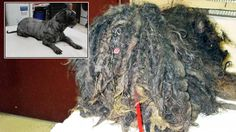 Scary Dogs, Dreadlocks, Fur, Hair Styles, Image, Beauty, Hair Plait Styles, Hairdos, Haircut Styles