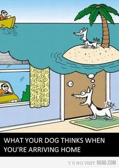 Funny pictures about What your dog thinks. Oh, and cool pics about What your dog thinks. Also, What your dog thinks photos. Memes Humor, Funny Memes, Hilarious, Dog Funnies, Dog Jokes, Dog Humor, Funny Dogs, Funny Animals, Cute Animals