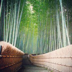 at Adashino-nenbutsuji Temple, Kyoto, Japan Another shot of Kyoto Japan, Nihon, Garden Paths, Cactus Plants, Temple, Drawings, Japan Photo, Beauty, Bamboo
