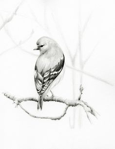 bird-drawing-pencil-drawing-giclee-fine